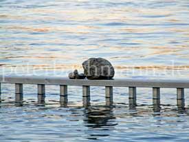 Stein auf Geländer, vor Wasser: Symbolbild für Content Marketing